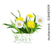 dandelion  green grass  yellow... | Shutterstock .eps vector #518485939