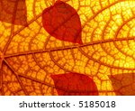 autumn leaf texture | Shutterstock . vector #5185018