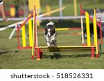Grey Border Collie Dog Jumping...