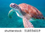 turtles    views around... | Shutterstock . vector #518556019