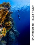 freediver descending along the...   Shutterstock . vector #518574304