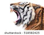 Tiger Fury - Fine Art prints