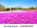 Moss Phlox And Mount Fuji ...