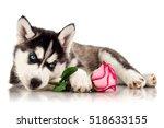 cute husky puppy with flower | Shutterstock . vector #518633155
