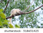 Rare White Squirrel  On The...