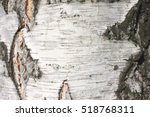 Birch Bark Texture Natural...