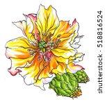 yellow cactus flower blossom.... | Shutterstock . vector #518816524