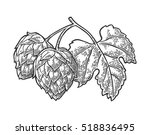 hop branch with leaf. isolated... | Shutterstock .eps vector #518836495