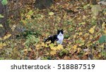 Black And White Cat In Colorfu...