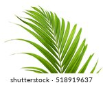 green leaves of palm tree... | Shutterstock . vector #518919637