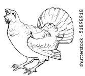 black cock drawing | Shutterstock .eps vector #51898918