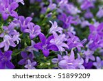 Tiny 'campanula get mee' (or bellflowers) soft floral background. Macro with extremely shallow dof. - stock photo