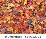 colorful damp fall leaves on... | Shutterstock . vector #519012721