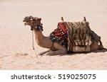 camel ride at desert | Shutterstock . vector #519025075