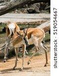 springbok | Shutterstock . vector #519054667