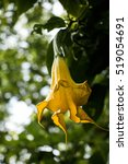 yellow flower | Shutterstock . vector #519054691