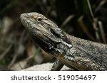 dragon | Shutterstock . vector #519054697