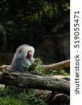 baboon | Shutterstock . vector #519055471