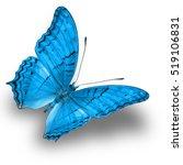 Beautiful Light Blue Butterfly...