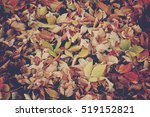 fall leaves background with... | Shutterstock . vector #519152821