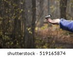 Chickadee Eating Bird Seed Fro...