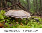 Mushrooms Grows Among Moss In...