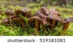 A Mushroom Grows In Moss In Th...
