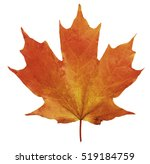 single maple leaf 3 | Shutterstock . vector #519184759
