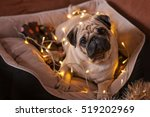 christmas dog with garland in... | Shutterstock . vector #519202969