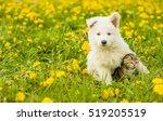 Stock photo puppy hugging a tabby kitten on a field of dandelions focus on cat 519205519