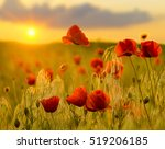 red poppies in the lispring... | Shutterstock . vector #519206185