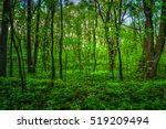 colorful summer landscape.... | Shutterstock . vector #519209494