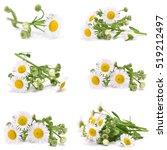 flower camomile | Shutterstock . vector #519212497