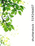 green leaves on white background | Shutterstock . vector #519246607