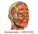 Muscle head man - stock photo