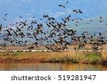 migrating cranes. pastoral... | Shutterstock . vector #519281947