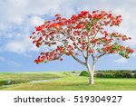 Big Tree With Red Flowers. Fla...
