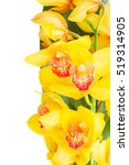 yellow orchid flowers border... | Shutterstock . vector #519314905