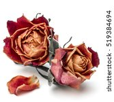 Stock photo dried rose flower head isolated on white background cutout 519384694