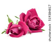 Stock photo pink rose flower bouquet isolated on white background cutout 519384817