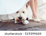 Cute Little Dog Sitting In A...