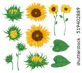 sunflowers set. collection... | Shutterstock .eps vector #519402889