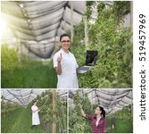 Small photo of Collage of young woman agronomist checking fruit trees in modern orchard with anti-hail net