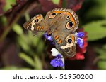 A Small Colorful Butterfly ...