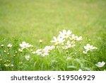 white flower and green grass... | Shutterstock . vector #519506929