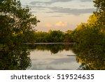 Beautiful Pond Through Tree An...