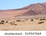 Oryx In Stunning Namibian Desert