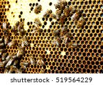 Bees In The Hive Convert Necta...