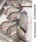 Tilapia Fish On Ice In The...