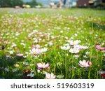 blooming flower   Shutterstock . vector #519603319